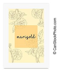 Marigold vector illustration hand drawn painted