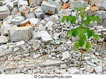 Debris and young plant - Young green plant growing alone in...