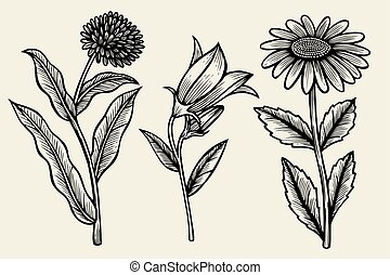 set of wildflowers - Set of Sketch wildflowers on a baige...