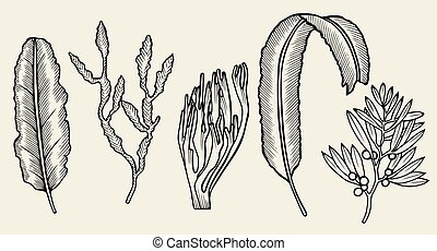 Set of seaweed Sketch. Hand drawn vector illustration...
