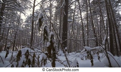 Winter pine forest with snow drifts stock footage video -...