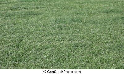 Slow motion of grass, windy day, flat color - Background of...