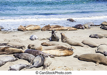 Sealions at the beach - Sealions relax and sleep at the...