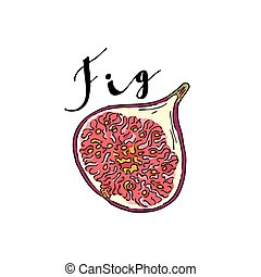 The cut fruit of fig on a white background with the word...