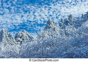 Trees under the snow in Huangshan National park. China.