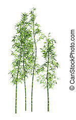 3D Rendering Bamboo Trees on White - 3D rendering of bamboo...