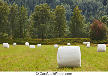 Packed fresh grass in the countryside. Norwegian landscape. Agriculture background.