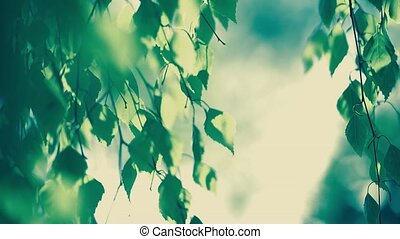 Spring, Nature, Leaf, Tree Growth