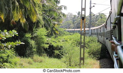 Indian Railways. Railway branch passes through palm forest....