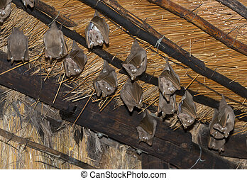 wild bat animals on the roof - wild bats hangin on the roof...