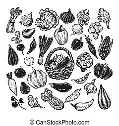 Vegetables, Set. - Hand drawn vector set of vegetables. Big...