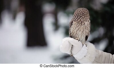 Owl in hands - White owl in hands at winter