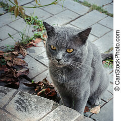 Gray cat is siting on paved footpath in front of stone porch...