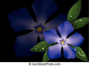 Purple periwinkle flowers on black background illustration