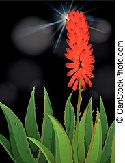 Aloe vera flower on black background