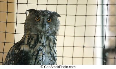 Owl in a cage - Eagle owl in a cage