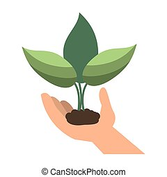 hand holding plant leaves