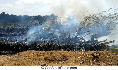 palm forest burning in Southeast Asia. trunks of exotic...