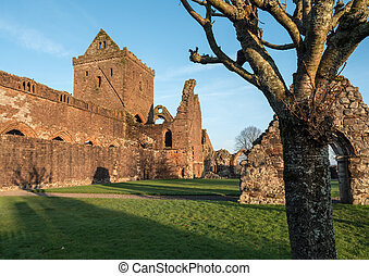 Sweetheart Abbey, Scotland - The ruins of Sweetheart Abbey ,...