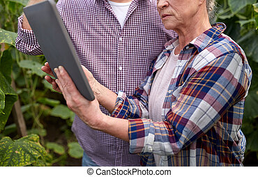 senior couple with tablet pc at farm greenhouse - farming,...