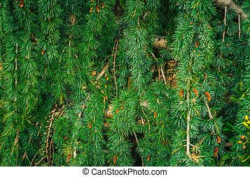 fir needle wall - prickly green fir needles wall texture...
