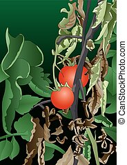 Tomato plant with stems affected by bacteria - Vector image