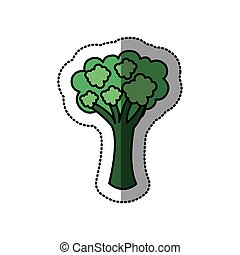 color vegetable broccoli icon