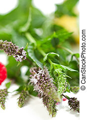 Fresh Flowering Mint - Fresh flowering mint on white with...