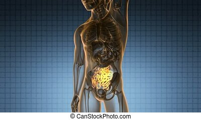 science anatomy scan of human small intestine glowing with yellow