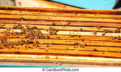 Beehive House - A large number of bees crawling on the nest....