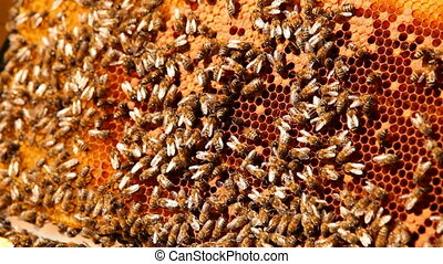 Apiary - A large number of bees crawling on the nest.