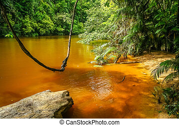 Jungle swing in Malaysia - Natural swing over river in the...