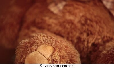 portrait brown teddy bear upward camera movement rack focus...