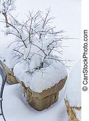 plantador, nevoso