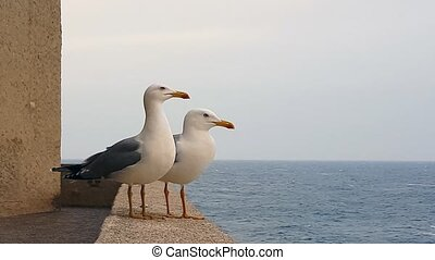 Two Seagulls On Sea Front Wall - Couple Of Seagulls Stand On...