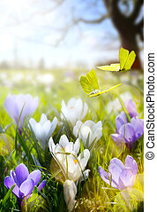 Spring Blooming flowers and fly butterfly - Spring...