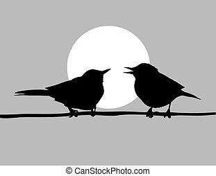 vetorial, desenho, dois, Pássaros, solar, fundo