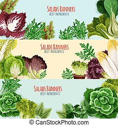 Salad greens and leaf vegetables banner set - Salads and...
