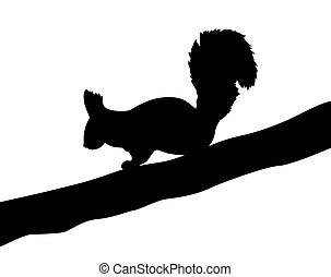 illustration of the squirrel on white background