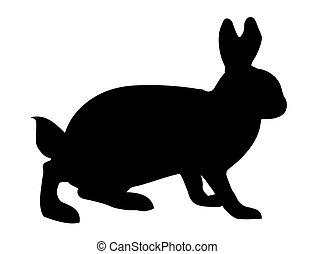 vector illustration hare on white background