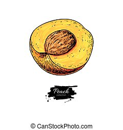 Peach slice vector drawing. Isolated hand drawn object on...