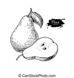 Pear vector drawing. Isolated hand drawn pear and sliced...
