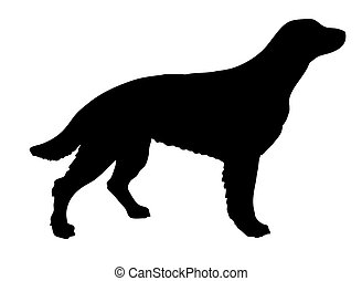 vector silhouette setter on white background
