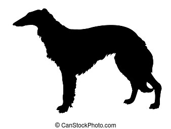 vector silhouette collie on white background