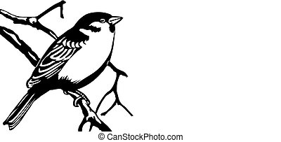 vector illustration of the bird on white background