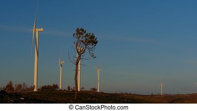 Several Windmills On a Power Plant, Portugal