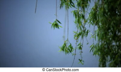 willow branches on blue background.