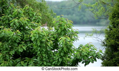 Watching a River and little house through the leaves of the green trees