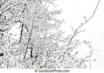 winter background of twigs with snow