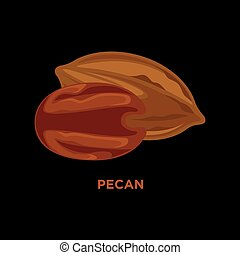 Vector illustration of pecan nut. Isolated